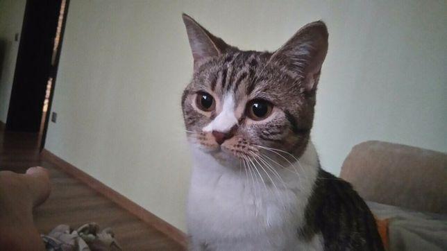 Пропала потерялась Кошка