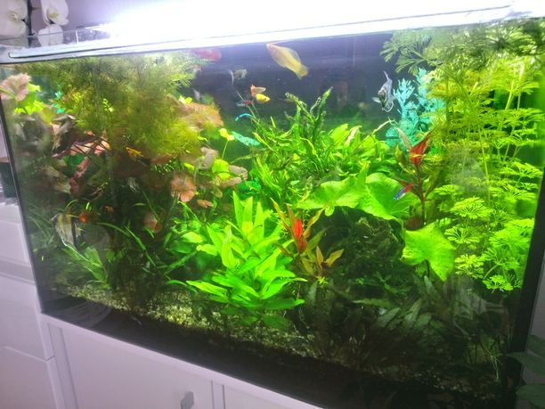 Rośliny akwariowe sprzedam