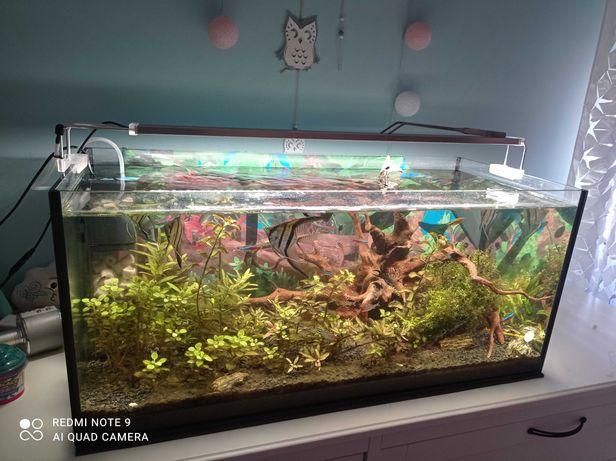 kompletne akwarium 100L