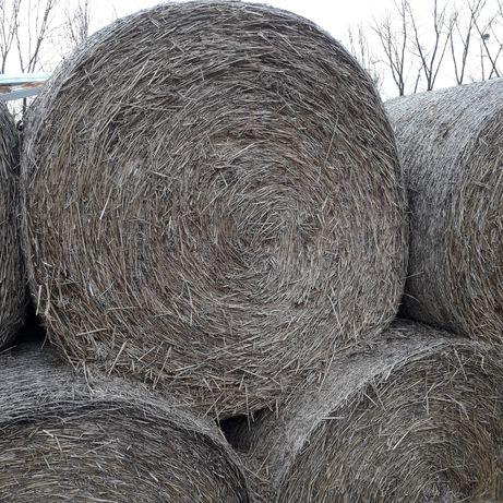 Słoma pszenna 150x150cm