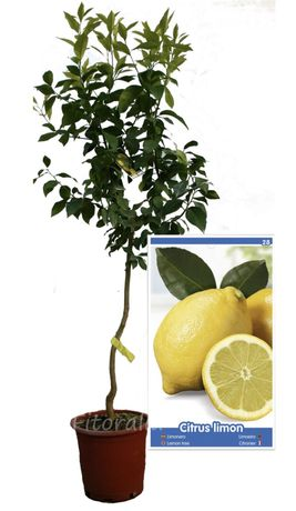 Limoeiros (varias variedades)