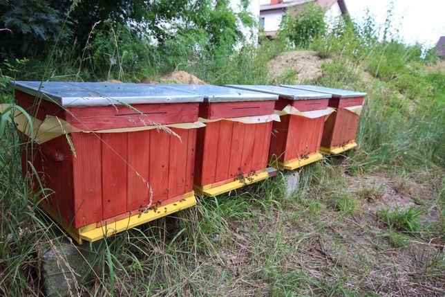 Silne zdrowe pszczoły ul ule wielkopolski miód pasieka rodziny odklady