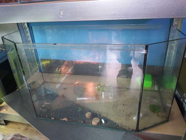 Nietypowe akwarium