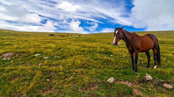 Продам лошадь...