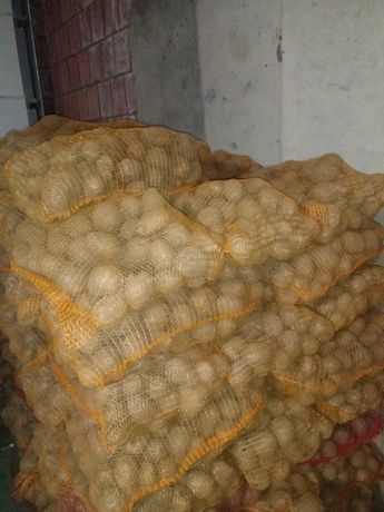 Ziemniaki pszenica