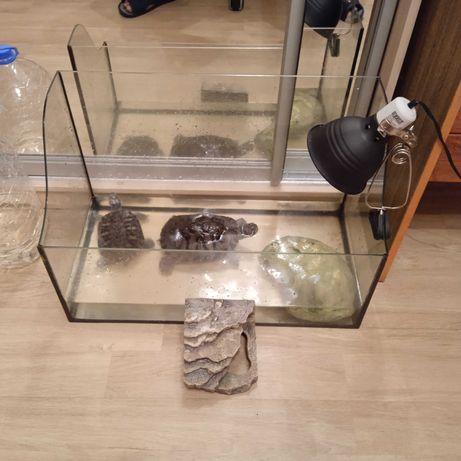 Продам черепах в хорошие руки с аквариумом +
