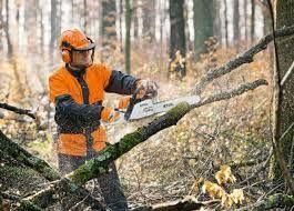 БЛАГОУСТРОЙСТВО УЧАСТКА/Спил деревьев, валка леса, вырубка кустов. htt