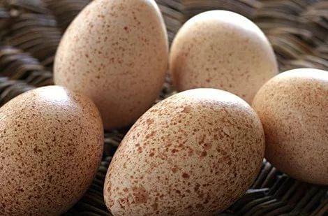 Индюшиное инкубационное яйцо БИГ 6 БЮТ 8 белая широкогрудая