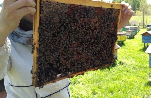 Продам бджолопакети Карпатки, Степовой