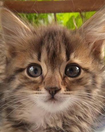 Котята котенок котики