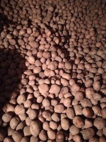 Ziemniaki IRGA,  Denar,  Owacja