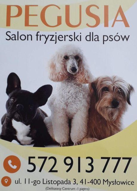 Salon Fryzjerski dla Piesków Pegusia - groomer - psi fryzjer