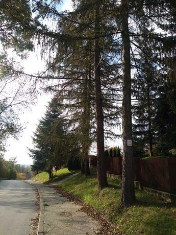 Drzewa do wycięcia z pozwoleniem