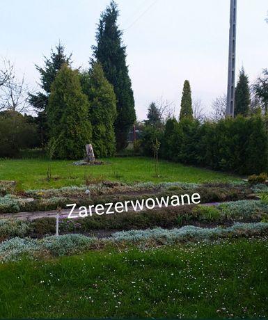 Ogródek ROD Jutrzenka