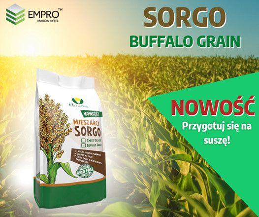 Buffalo Grain, sorgo na kiszonkę, sorgo, trawa sudańska, cukrosorgo,