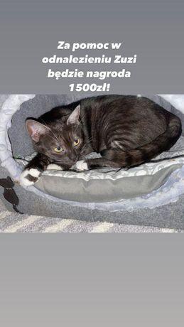 Zaginęła kotka Zuzia! Nagroda 1500 zł za pomoc w odnalezieniu!
