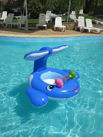 Надувной дельфин, круг