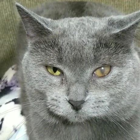 Особенная кошечка Челси ищет дом и семью