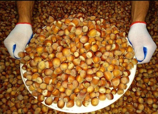 Фундук, орех, лесной орех, лісовий горіх, 2021 року збору!