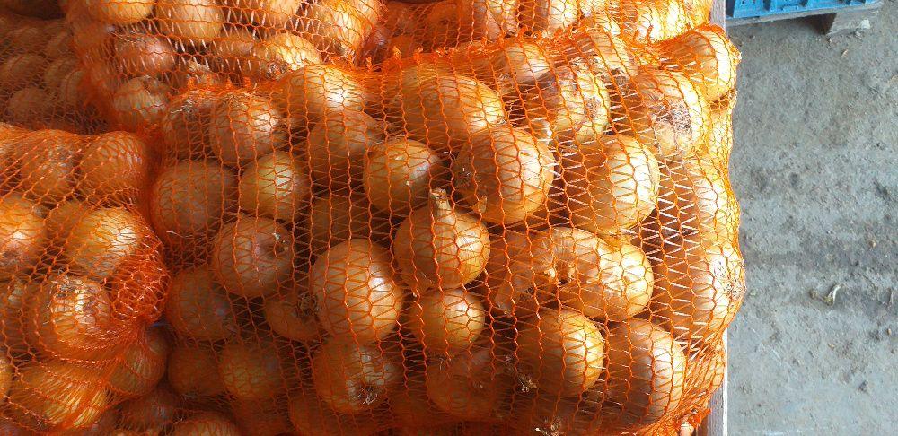 Sprzedam cebule żółtą Miechów-Charsznica - image 1