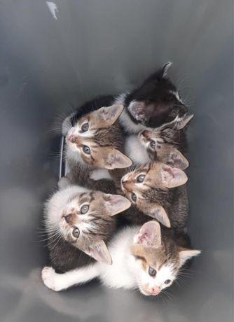 Oddam ! Kotki szukają kochajacego domu