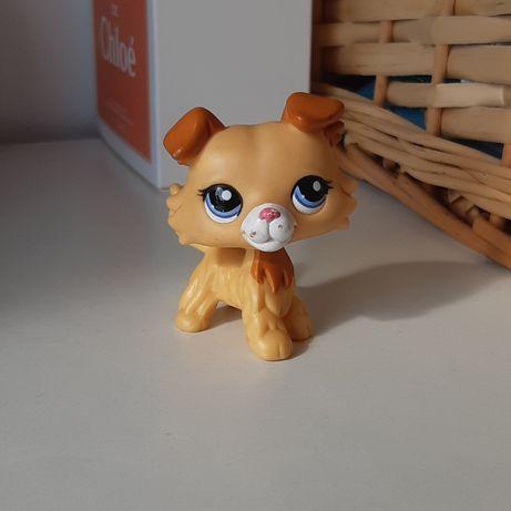 Littleet pet shop collie #2452