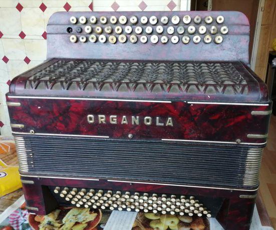 Akordeon guzikowy organola