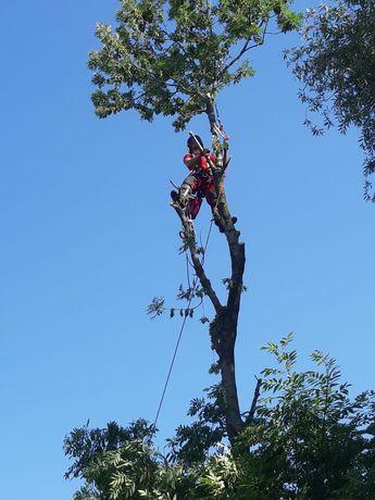 Wycinka drzew, przycinanie koron i gałęzi, techniki arborystyczne