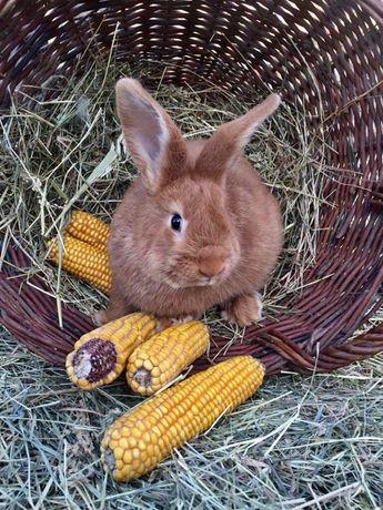 Кролики: молодняк та дорослі.