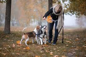 Выгул собак любой породы.
