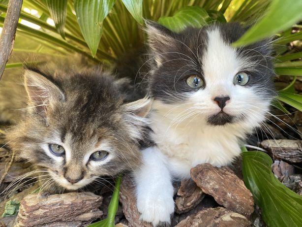 Котята милые и ласковые