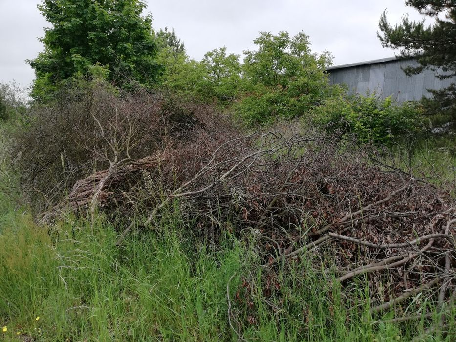 Oddam gałęzie z drzew liściastych Wrzosowa - image 1