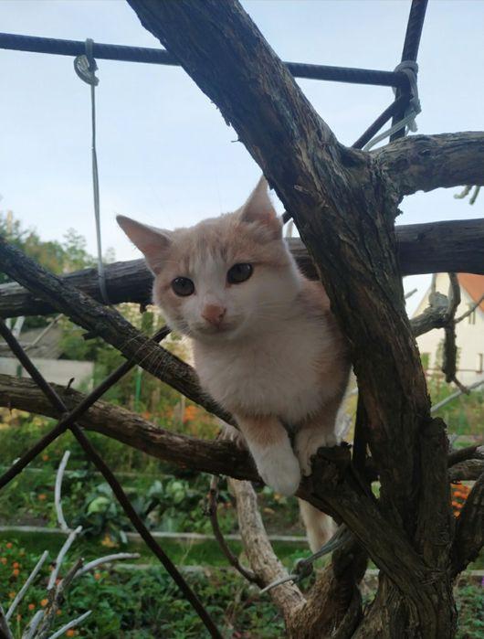 Котик Костополь - изображение 1