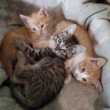 Ищу дом для котят