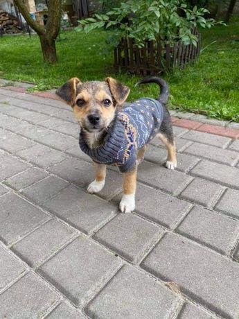 Малютка Грейс шукає дім, собака, цуцик, щенок