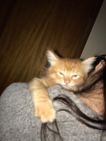 Gatinhos bebe para adopcão