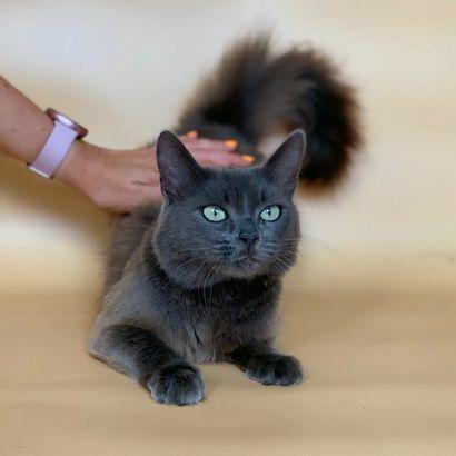 Котенок Мона ищет семью котенок котята кошеня кот кошка котеня
