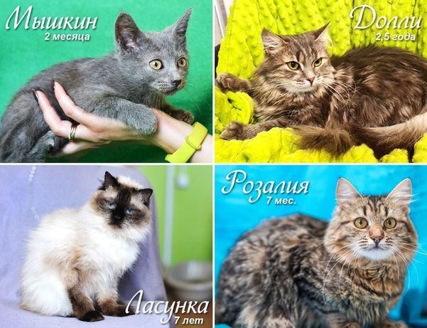Котята, котики, кошечки Мечтают о Своей Семье! Подарите Жизнь