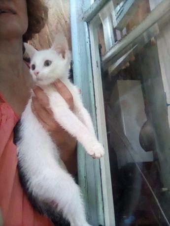 Белый котёнок с черным хвостом