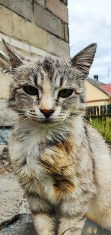Srebrna koteczka szuka domu na już