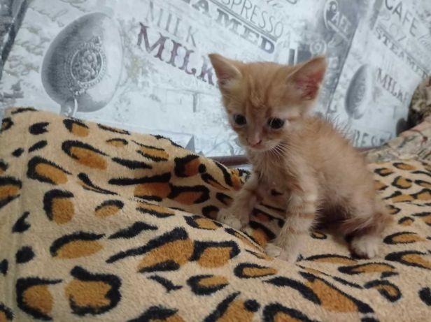Супер предложение!! Денежный рыжий кот