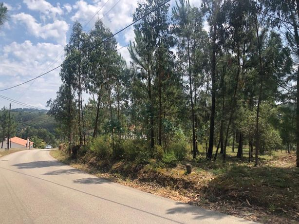 Terreno para Construção de Moradia em Torres Novas - Fungalvaz