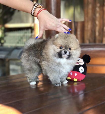 Мальчик мини рыже соболиный мишка