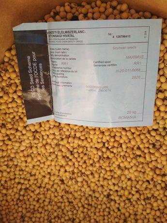 Продам насіння сої Максимус