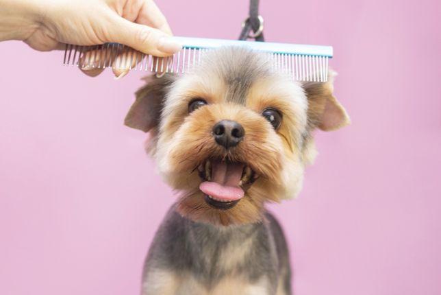 Fryzjer Twojego Psiaka - Psi Fryzjer - Groomer - Psie SPA - Mikołów