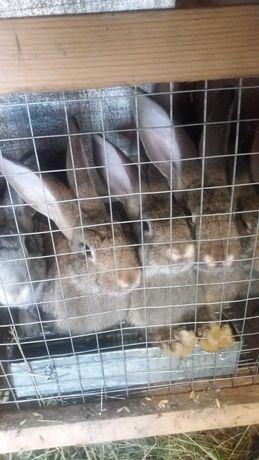 Продам кролей недорого