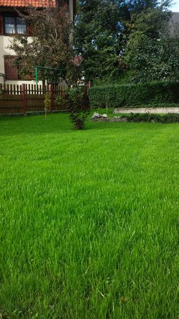 nasiona trawy trawa trawnik