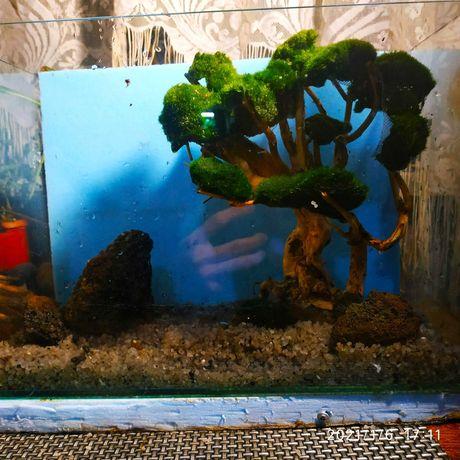 Коряга бонсай для аквариума