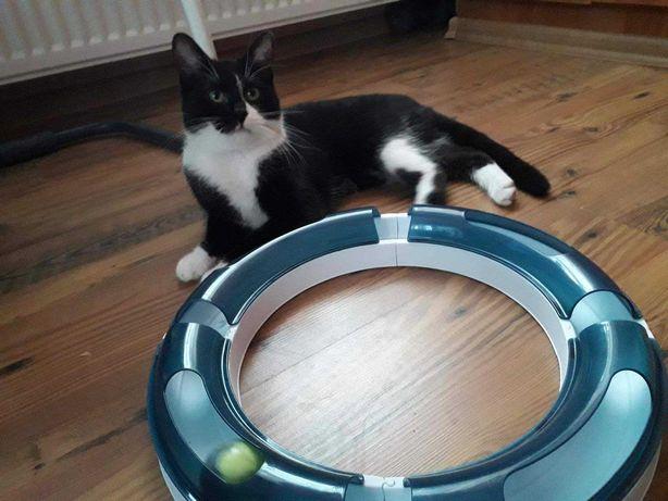 Kot Grzesio szuka domu