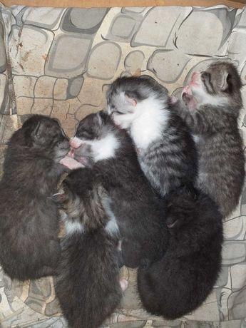 Oddam w dobre ręce śliczne kotki możliwość rezerwacji